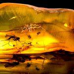 LA RESINA: DALLA NATURA… ALL'UOMO